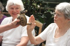 Staff introduce the Hi 5 turtle to Sarah